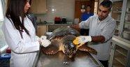 Bostanlı sahilinde caretta caretta alarmı