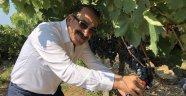 Türk ve Güney Afrikalı kiraz ve üzüm ihracatçıları ortak hareket edecek